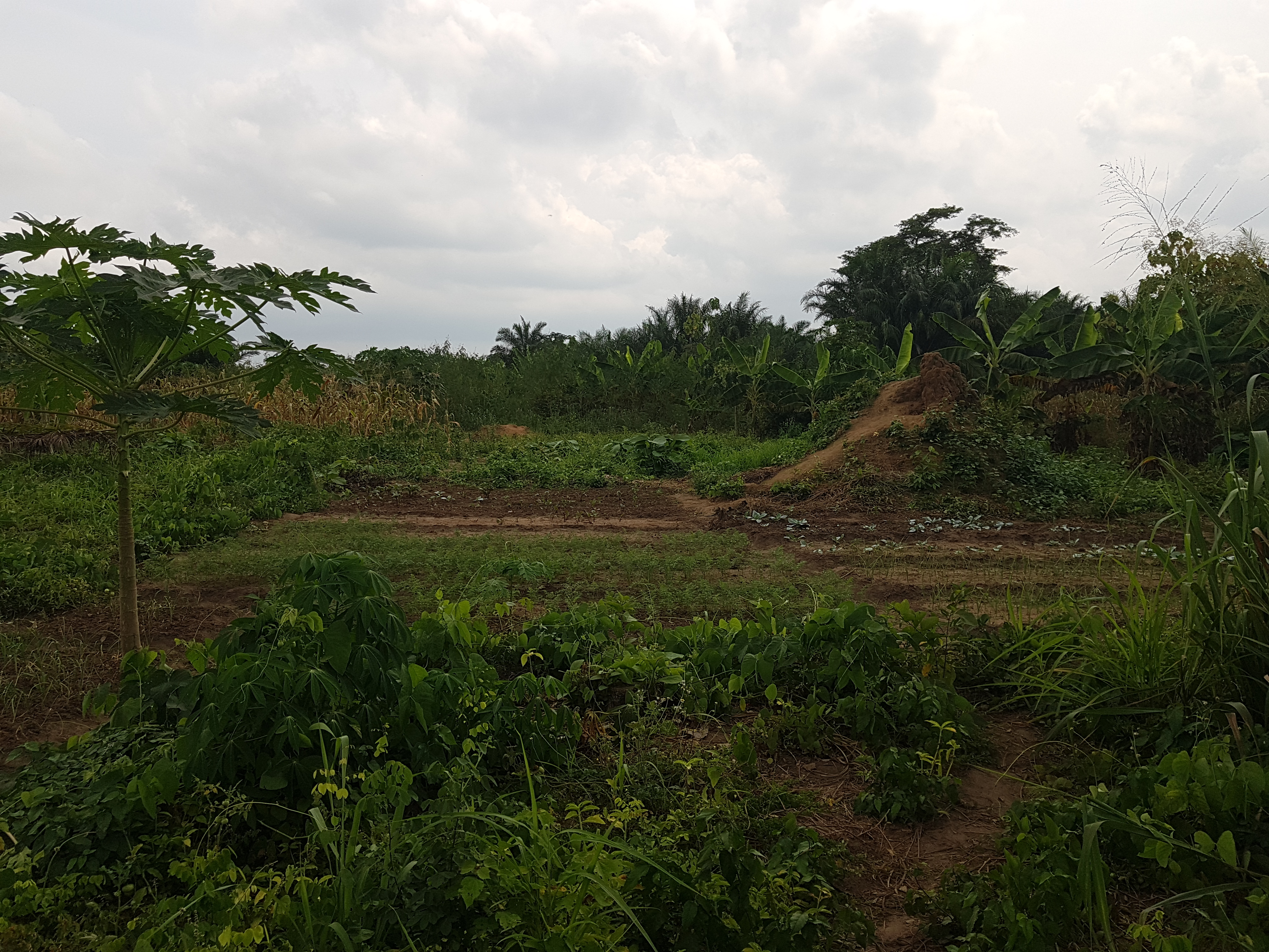 Enouama Togo